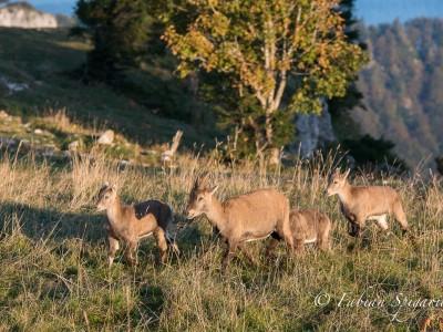 Matinée d'automne au Creux-du-Van