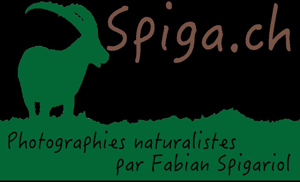 Spiga.ch