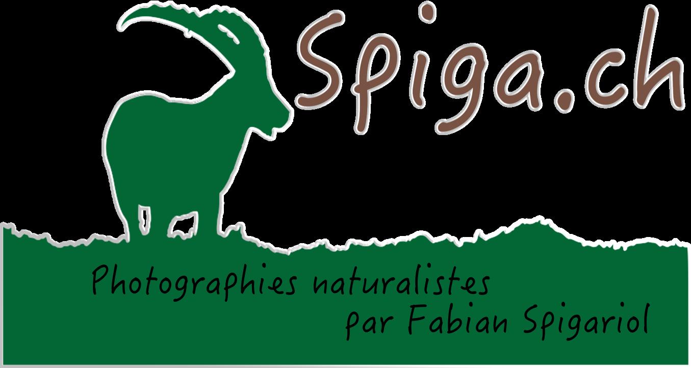 Spiga.ch - Photographies naturalistes du Val-de-Travers (Neuchâtel)