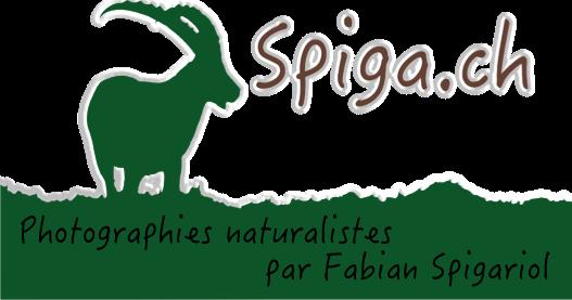 Spiga.ch - Photographies naturalistes du canton de Neuchâtel