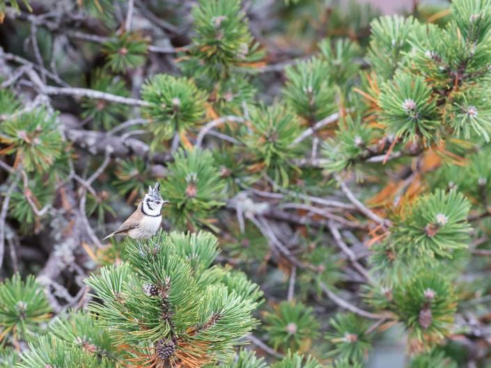 Oiseaux des forêts & des crêtes