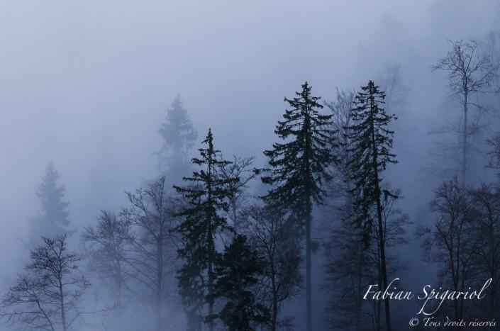 Ambiance brumeuse - Lorsque les brumes matinales d'automne envahissent la forêt du pied du Creux-du-Van, l'ambiance devient presque mystique...