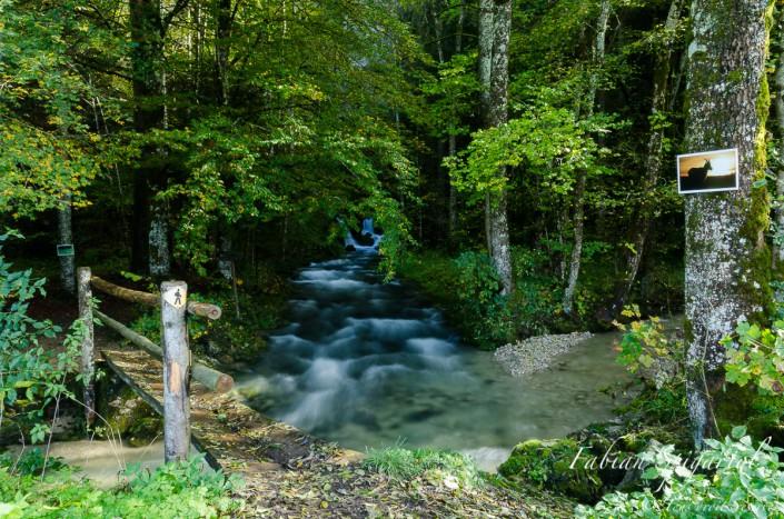Lieu magique et magnifique, la Sourde a aussi accueilli l'exposition de photographies naturalistes en plein air éphémère de Johann Boffetti et Fabian Spigariol.