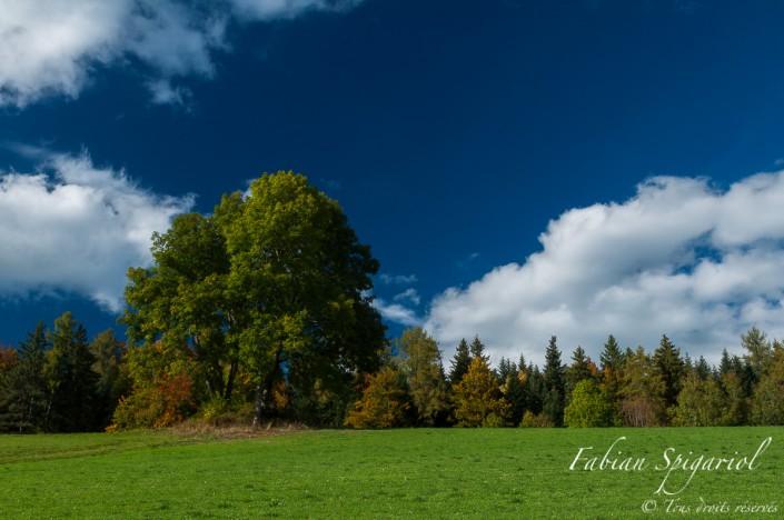 L'arbre qui cache la forêt - Vue automnale de la forêt depuis le hameau de Plancemont, sur les hauteurs de Couvet (Val-de-Travers, Suisse).