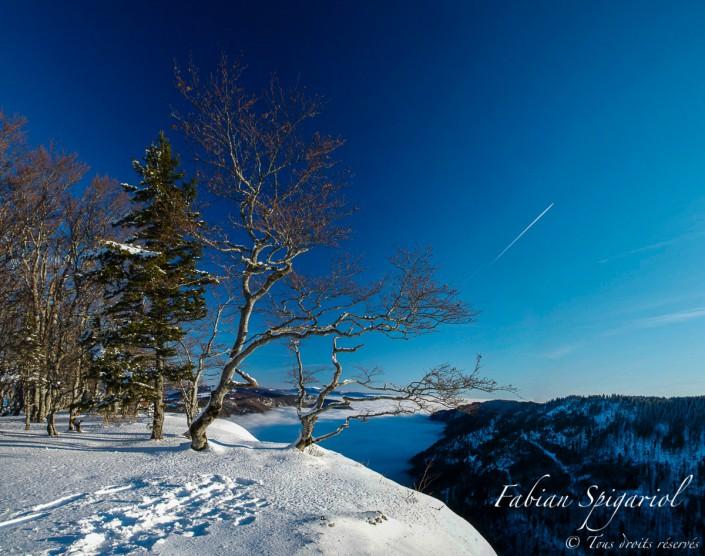 """Balcon du Jura - Près du lieu dit le """"vertige"""", les arbres tortueux bordent la falaise du Creux-du-Van, dans le jura neuchâtelois."""