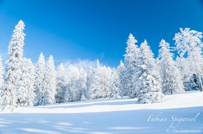 Forêt figée & Arbres givrés - Lorsque les arbres sont saupoudrés de neige, la forêt bordant la ferme du Soillat près du Creux du Van prend des airs de Taïga...