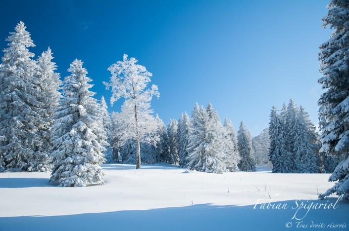 Forêt figée dans les glaces au coeur de l'hiver près du Creux-du-Van.