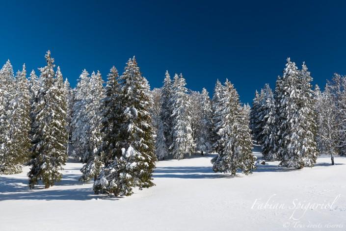 Toundra neuchâteloise - Sapins couverts de neige au sommet du Creux-du-Van, au coeur du canton de Neuchâtel.