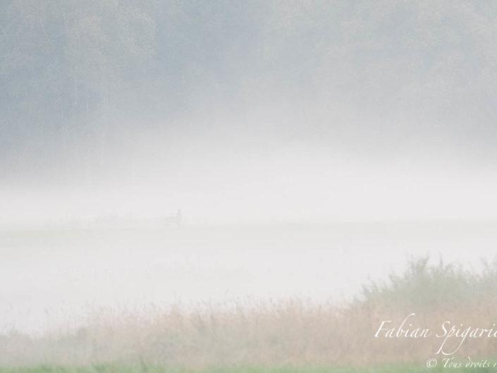 Sans un bruit, le brocard s'avance dans le pâturage boisé embrumé des crêtes du Val-de-Travers. Il s'éclipsera dans le bois quelques instants plus tard comme un fantôme.