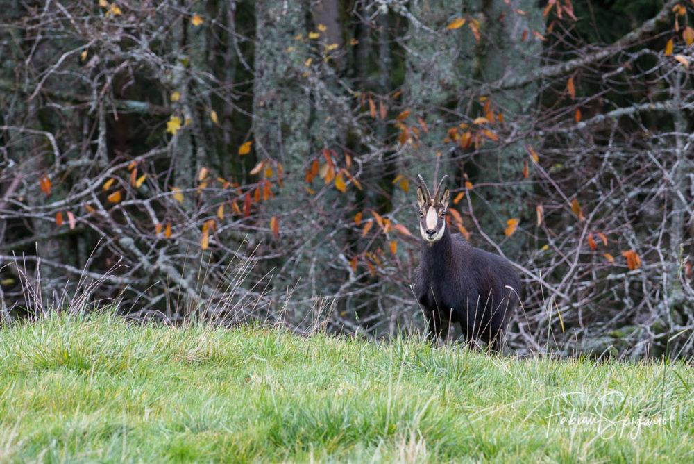 L'automne laisser bientôt place au long hiver sur les crêtes du Val-de-Travers.