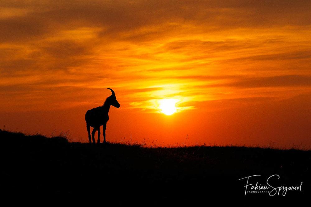 Pas besoin de parcourir le monde jusqu'en Afrique pour retrouver l'ambiance de la savane... La preuve avec cette étagne photographiée dans la région du Creux-du-Van.