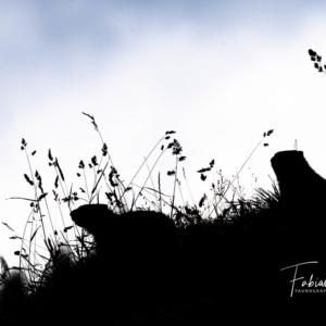 Les rongeurs de l'ombre