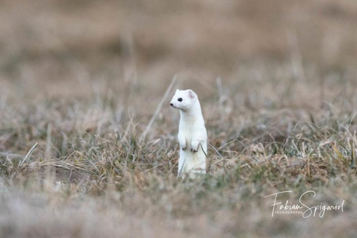 Une chandelle blanche