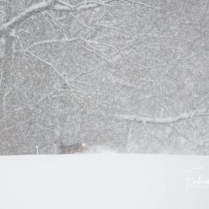 Chevrette sous la neige