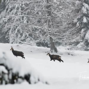 La troupe dans la neige